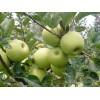 今日上市的早熟苹果产地市场批发价格