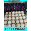 提供科力普KP-19型禽蛋喷码机生产型企业