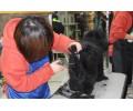 烟台宠物美容培训——烟台宠物美容师培训当选皮皮熊宠物
