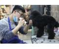 山东信誉好的烟台宠物美容师培训-烟台宠物美容培训