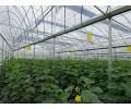 智能生态园艺温室公司推荐|蔬菜温室大棚建设
