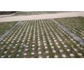 瑞祥实业_*的埋入式植草砖供应商-*型的埋入式植草砖