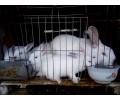 养殖獭兔的重要性,新民养兔专业合作社告诉您!