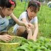 节假日带上您的宝贝来强兴农趣园体验农家生活