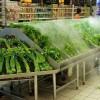 郑州耐用的超市蔬菜加湿器出售|上海超市蔬菜加湿器