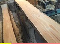 辐射松烘干板材批发  家具厂专用无结辐射松