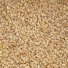 本粮库求购冬小麦粮食