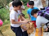 五一節假日來強興農趣園品嘗農家走地雞瘦身鯇魚