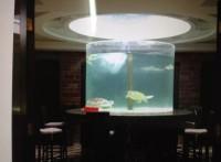 黄埔区定做鱼缸公司,定制亚克力鱼缸,鱼缸护理清洗