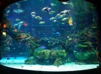广州鱼缸订做*海珠区壁挂式鱼缸*昌岗玻璃鱼缸*珊瑚鱼缸