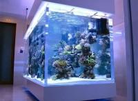 广州鱼缸订做*海珠区鱼缸厂家*南洲玻璃鱼缸*超白玻璃鱼缸