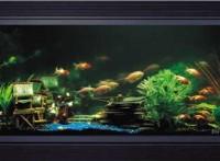 深圳鱼缸设计,深圳有机玻璃鱼缸