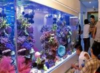 東莞魚缸設計,東莞不規格魚缸