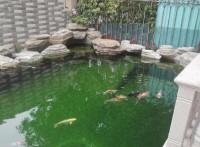 濟南庭院錦鯉魚池建造濟南錦鯉魚池泡池濟南錦鯉魚池 深