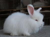 全面供應養殖兔子專用飼料添加劑石膏粉