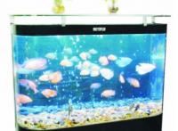 深圳*海水珊瑚魚缸*魚缸設計價格