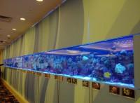 深圳*玻璃鱼缸*珊瑚鱼缸品牌