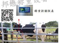 奶牛、肉牛智能称重系统