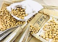 供应东北有机大豆脱毒熟化加工 可散卖可oem贴牌