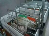 泊头市炜程畜牧机械主要,生产母猪产床 ,母猪定位栏