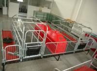 养猪设备  母猪产床  仔猪保温箱