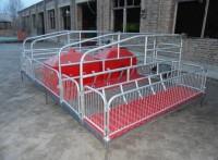 母猪产床设备猪用单体双体产床定位栏