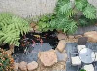 济南鱼池防水怎么做济南鱼池工程济南鱼池过滤价格