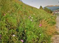 客土噴播施工 邊坡植草綠化