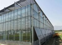 文洛式草莓大棚,玻璃温室价格,玻璃温室大棚报价,辉腾温室