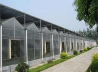 智能大棚建造,玻璃温室大棚,温室香椿大棚,辉腾温室
