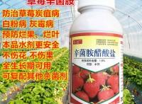 草莓专用药防病烂果烂叶杀菌剂灰霉病炭疽病叶片斑点病辛菌胺