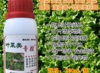 叶菜类控旺蔬菜专用芫荽香菜生菜茼蒿苦苣秧叶片厚绿徒长太快矮壮