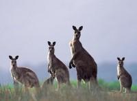 澳洲技術移民就找洲巡出國