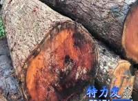 特力发供应桃花芯原木木枋板材家具料菜板料桃花心