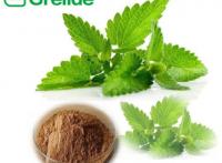 法國香蜂草提取物食品香料香蜂草粉香蜂草提取物迷迭香酸2%