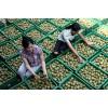 陕西批发正宗成活率高品种纯正专家指导黄心猕猴桃苗木