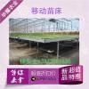 沧州温室移动苗床哪里的质量好价格优
