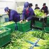 供应惠州好的惠州康民食材配送服务-专业食材配送