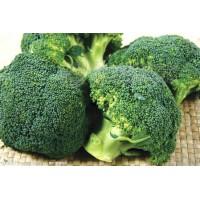 西兰花提取物 萝卜硫素