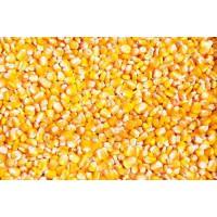 华粮求购高粱大米碎米小麦糯米淀粉豆类等