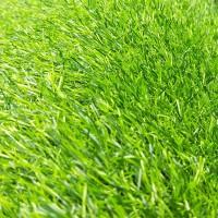 绿霸仿真草坪人造草坪地毯 绿草坪人工草坪塑料草坪装饰休闲