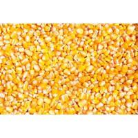 企业大批量采购玉米