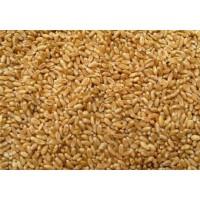 企业长期采购小麦