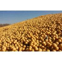 饲料厂长期采购大豆