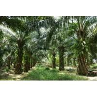 棕櫚原油和潤滑油脂