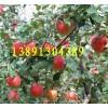 陕西花冠苹果价格陕西金世纪苹果产地陕西粉红女士苹果产地行情