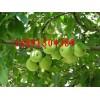 陕西青苹果价格陕西晨阳苹果行情陕西夏红苹果批发陕西藤木苹果