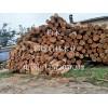 大批量供应大直径优质柏木 多用于建筑 车船桥梁 家具和器具等
