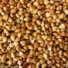 汉江大量求购荞麦大麦小麦苦荞甜荞等原料