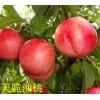 濰坊品種好的桃樹苗供應|山東桃樹苗